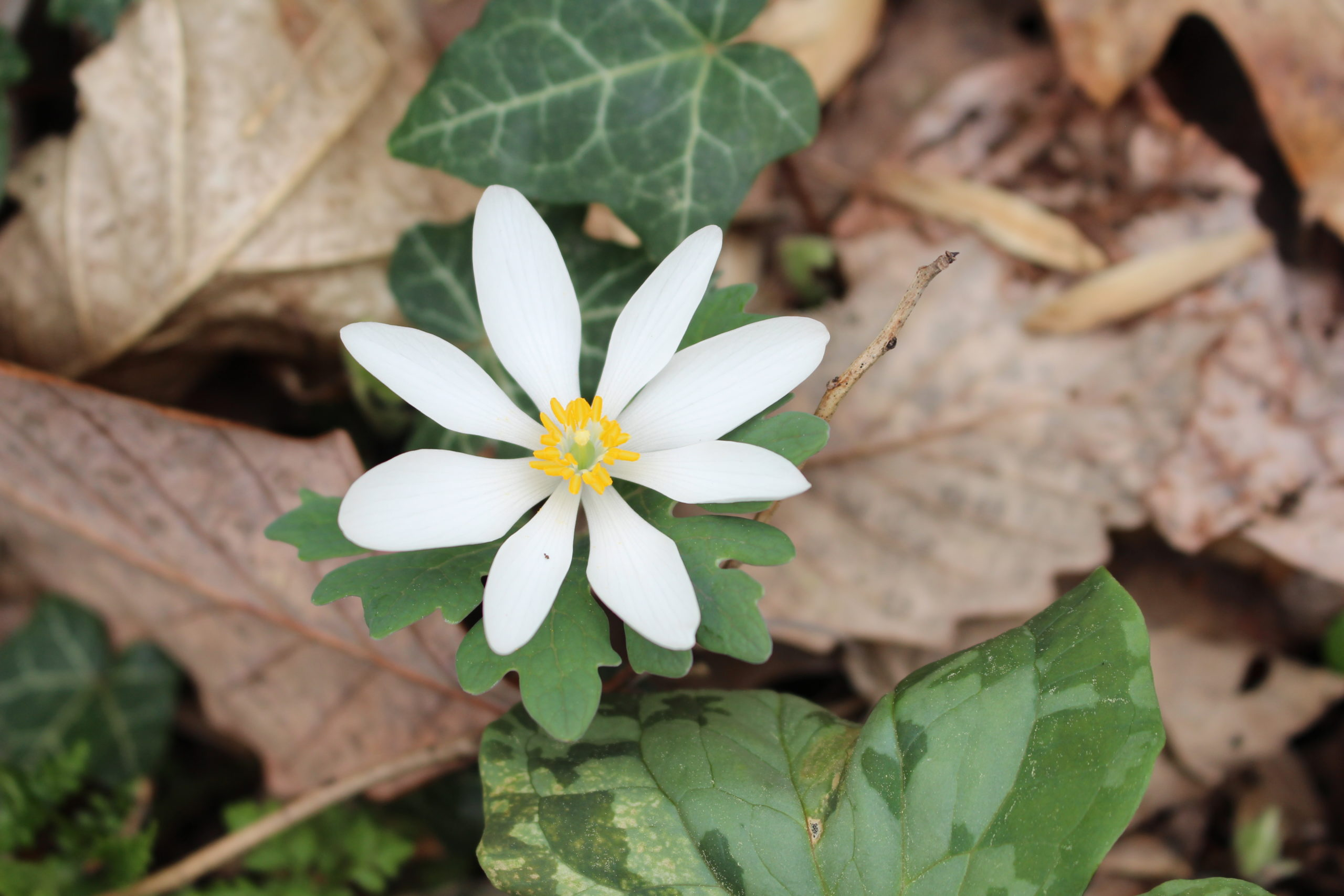 Spring on the Mountain: A Blooming of Biodiversity