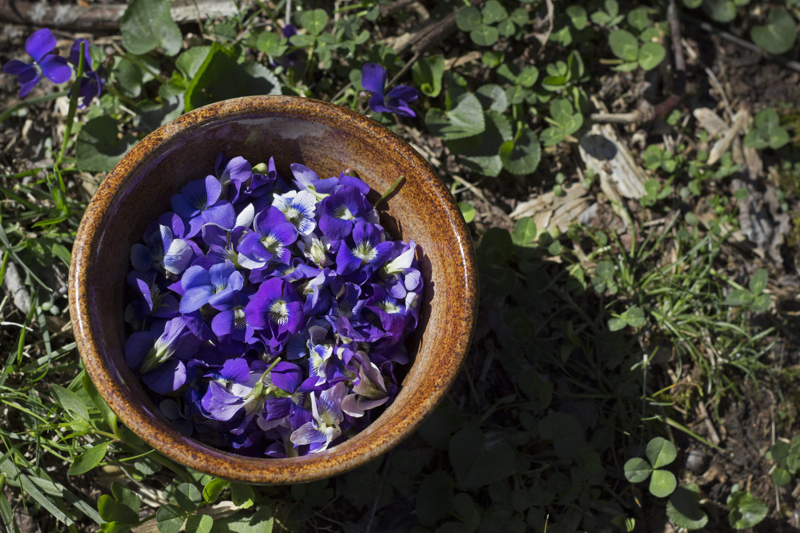 Wild Violet Syrup