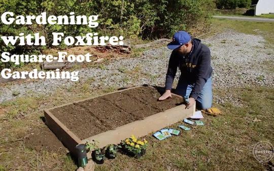 Gardening with Foxfire: Square-Foot Gardening